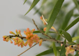 Horizontal orchids