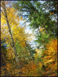 a Walk in the fall forest 3a.jpg
