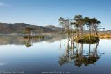 Loch Assynt Pines_EL26583.jpg