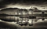 Assynt Pines_EL26569-Edit.jpg