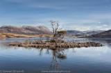 Loch Assynt Trees_SM39885.jpg