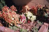 carrot flowers.jpg