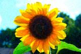 Sun-four.jpg