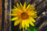 Sun-one.jpg
