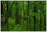 foresta pluviale ;-)