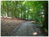 Bois de Hampteau