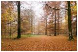 Bois de Vance