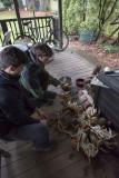 Big Dungeness crabs