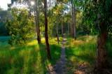 summer morning walk