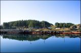 Salmon farm..........