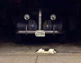 Asleep near the wheels