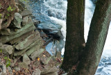 Rapids view