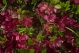 favorite_florals
