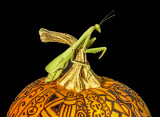 Mantis on zentangled pumpkin