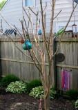 crape myrtle - garden art