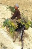 Farmer on his donkey, Matmata