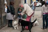 Doglovers everywhere...