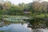 Lagoon at my guesthouse outside Polonnaruwa