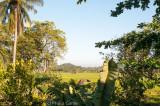 Rice padi surrounds the town of Kataragama...