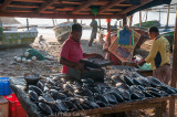 Sorting the fishing catch at sunrise, Galle Fort