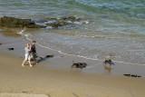 A walk along the beach, Skenes Creek