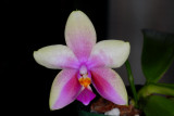 Julie's Orchid Collection
