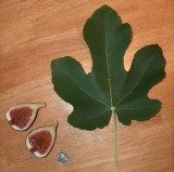 2006 Leaf and Fruit