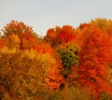 fall_2015