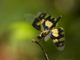 India, January 2014: Dragonflies