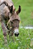 Donkey DSC_0800xpb