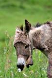 Donkey DSC_0799xpb