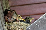 Couple on the nest DSC_1154xpb