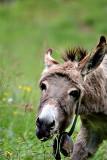 Donkey DSC_0810xpb