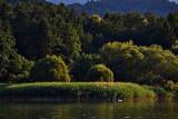 The green Paradise on the River Drava dsc0522xpb