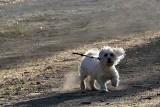 Dog DSC_0432xpb