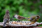 Birds dsc-0059xpb