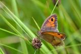 Butterfly  DSC_0655xpb