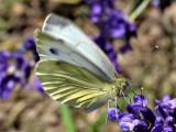 Butterfly DSC_0885xpb