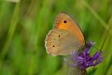 Butterfly  DSC_0775xNpb