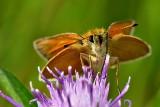 Butterfly  DSC_0278xpb