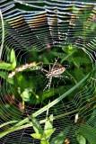 Spider dsc0239ypb