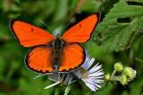 Butterfly  dsc -0376xpb
