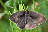 Butterfly  DSC_0719xNpb