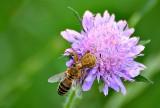 Spider & bee DSC_1134xpb