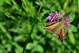 Butterfly dsc_0423xpb