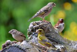 Birds Meeting  DSC_0611xpb