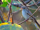 Bird DSCNN9978gpb