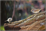 Birds DSC_0161xpb