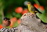 Birds DSC_02062016pb