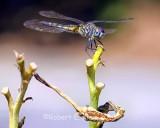 kleinr_Bugs_157.jpg